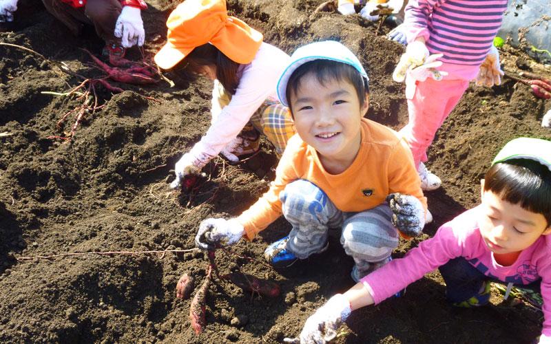 芋掘り遠足